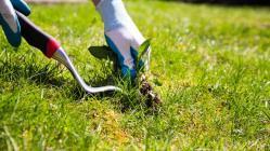 weeds-136406596078703901-160603160015